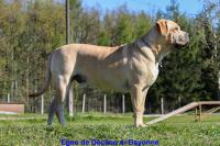 Egeo De Declino Di Bayonne
