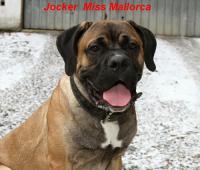 Jocker Miss Mallorca