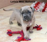 Letizia Miss Mallorca